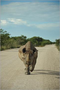 1a Black Rhino