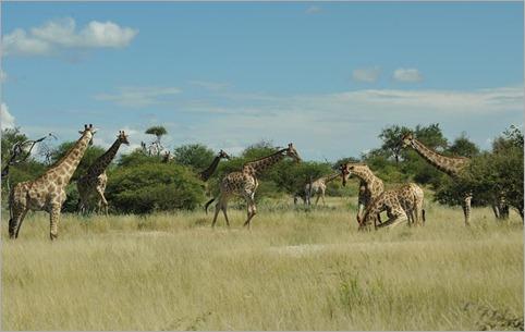 1e. Giraffe waterhole conference