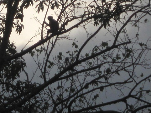 6c. Monkey watches over our campsite, 120km from Luanda