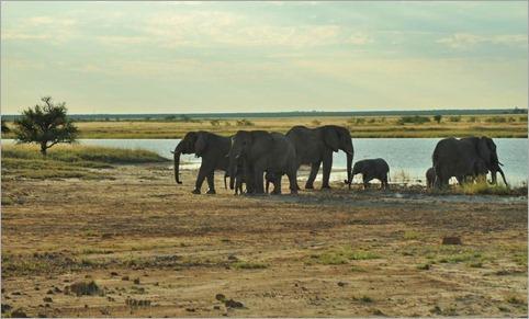 7a. Elephants on Fischer's Pan