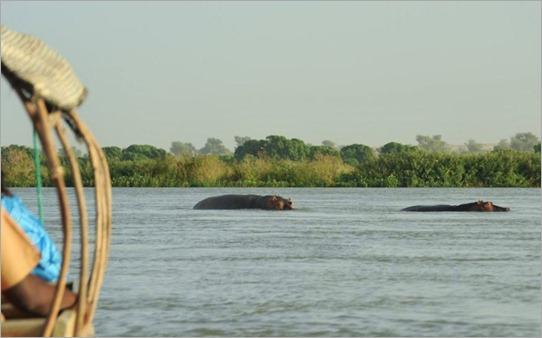 1a. Hippos
