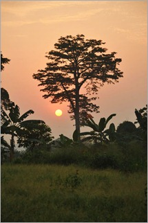 5c. Camp beside pineapple farm, tropics