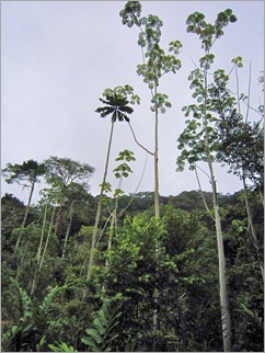 1a. Gabon rainforest, roadside stop