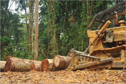 1c. Logging operation near campsite, Gabon