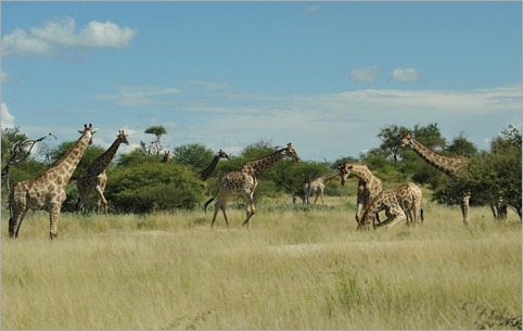 1e. Giraffe waterhole conference